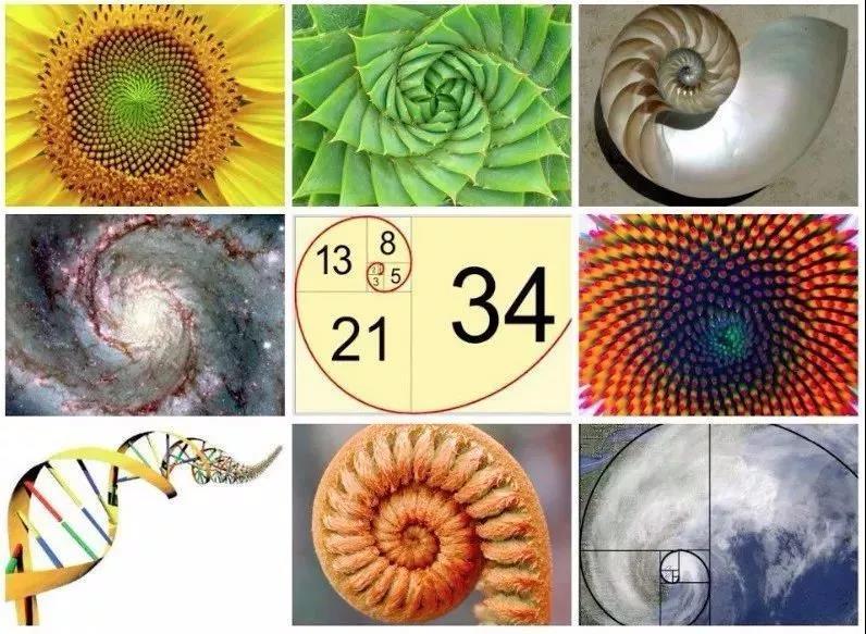生物中隱藏的斐波那契數列